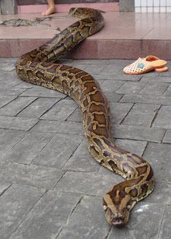拯救蟒蛇记
